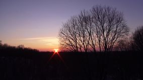 Sunset against a backdrop of bushes and trees. Time lapse video full hd.  stock footage