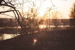 Sunset against the background of willow branches royalty free stock photos