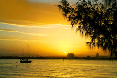 Sunset Against Casuarina Royalty Free Stock Photography
