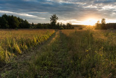 Sunset in agricultural field Stock Photography
