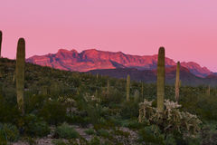 Sunset Ajo Range Organ Pipe Cactus NM landscape AZ. Sonoran Desert of Organ Pipe Cactus National Monument, Arizona, late evening sun glow on Ajo Range mountains Royalty Free Stock Image