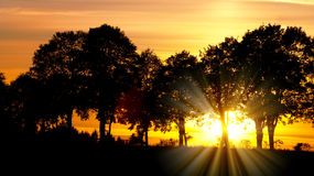 Sunset with alley of lime tree. View from wood with contreyour sun rays, sunset with alley of lime tree Stock Image