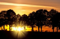 Sunset with alley of lime tree Royalty Free Stock Images