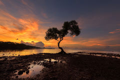 Sunset with alone tree in the beach chumphon south province of t Royalty Free Stock Photography
