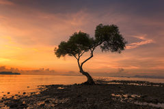 sunset with alone tree in the beach chumphon south province of t Royalty Free Stock Images