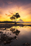 sunset with alone tree in the beach chumphon south province of t Royalty Free Stock Photos