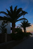 Sunset along the Pinewalk in Puerto Pollensa / Port de Pollenca. Palm tree silhouette during spanish sunset royalty free stock image