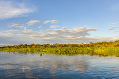 Sunset in the Amazon Rainforest, Manaos, Brazil Royalty Free Stock Images