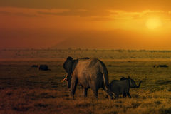 Sunset in Amboseli Stock Images