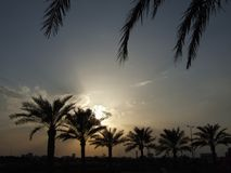 Sunset And Palms In Bahrain Stock Photography