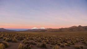 Sunset in Andes. Parinacota and Pomerade volcanos. High Andean landscape in the Andes. High Andean tundra landscape in the mountains of the Andes Royalty Free Stock Image