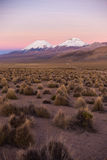 Sunset in Andes. Parinacota and Pomerade volcanos. High Andean landscape in the Andes. High Andean tundra landscape in the mountains of the Andes Royalty Free Stock Photo