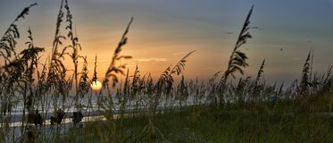 Sunset On Anna Maria Island. Panorama of sunset through reeds on beach,Anna Maria Island,Florida royalty free stock photos