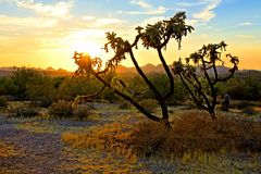 Sunset in the Arizona desert with cactus and mountains stock images
