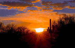 Sunset on the Arizona desert. Sunset at dusk on the Arizona desert.  A Saguaro cactus shimmers as the sun going down in the east casting a glow in silhouette Royalty Free Stock Image
