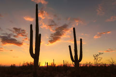 Sunset in Arizona, with Saguaro silhouette. Royalty Free Stock Image