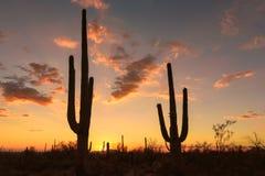 Sunset in Arizona, with Saguaro silhouette. royalty free stock image