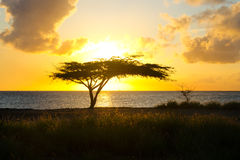 Sunset in Aruba Royalty Free Stock Images