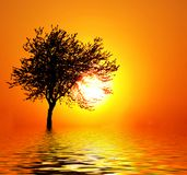 Sunset as a fruit. Sun setting through the branches of a lone tree stock image