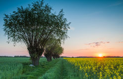 Sunset as seen from the dirt road Royalty Free Stock Image