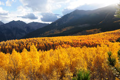 Sunset Aspen Valley Royalty Free Stock Image