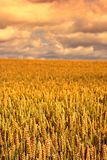 Sunset At Harvest Royalty Free Stock Images