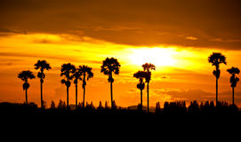 Sunset At Palm Tree Royalty Free Stock Photo