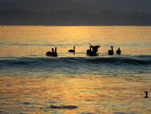 Sunset. Atardecer, sunset, pelicans stock photography