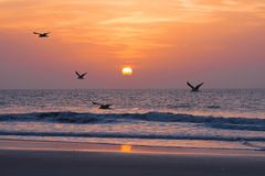 Sunset on the atlantic ocean Stock Photography