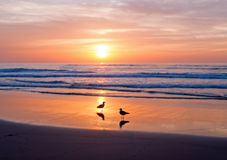 Sunset at the atlantic ocean Royalty Free Stock Photo