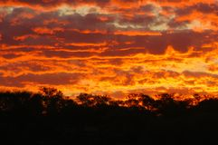 Sunset in the Australian bush Royalty Free Stock Photo