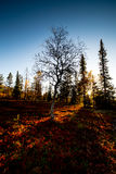 Sunset and autumn colors Stock Image