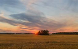 Sunset in the autumn field. Beautiful evening in the autumn field after harvest Royalty Free Stock Image