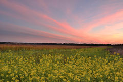 Sunset in the autumn field Royalty Free Stock Photos