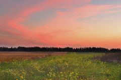 Sunset in the autumn field Royalty Free Stock Images