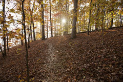 Sunset through autumn foliage Royalty Free Stock Image