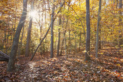 Sunset through autumn foliage Stock Photos