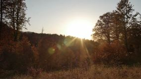 Sunset in autumn forest with beautiful flare stock video