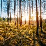 Sunset In Autumn Forest Stock Photography