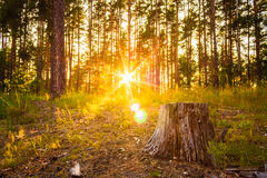Sunset in autumn forest stock photos