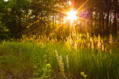 Sunset in autumn forest Stock Photo
