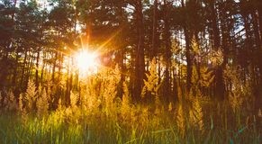 Sunset In Autumn Forest Royalty Free Stock Image