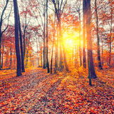Sunset in the autumn forest Stock Photos