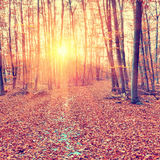 Sunset in the autumn forest Stock Photo