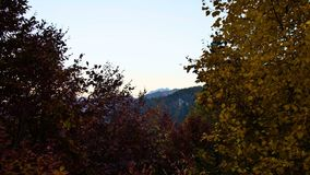 After sunset in autumn forest. yellow and red leaves in the wind stock video footage