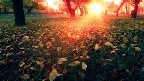 Sunset in the autumn garden stock footage