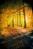 Sunset in autumn park Royalty Free Stock Photo
