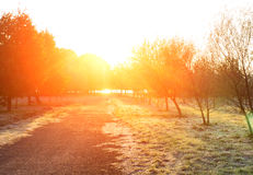Sunset in autumn park. Autumn landscape. Royalty Free Stock Photography