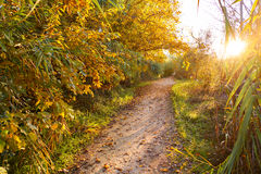 Sunset on autumn Parque del Turia of Valencia Royalty Free Stock Photography