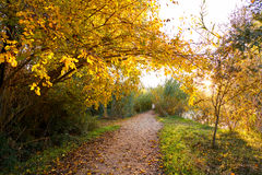 Sunset on autumn Parque del Turia of Valencia Royalty Free Stock Images